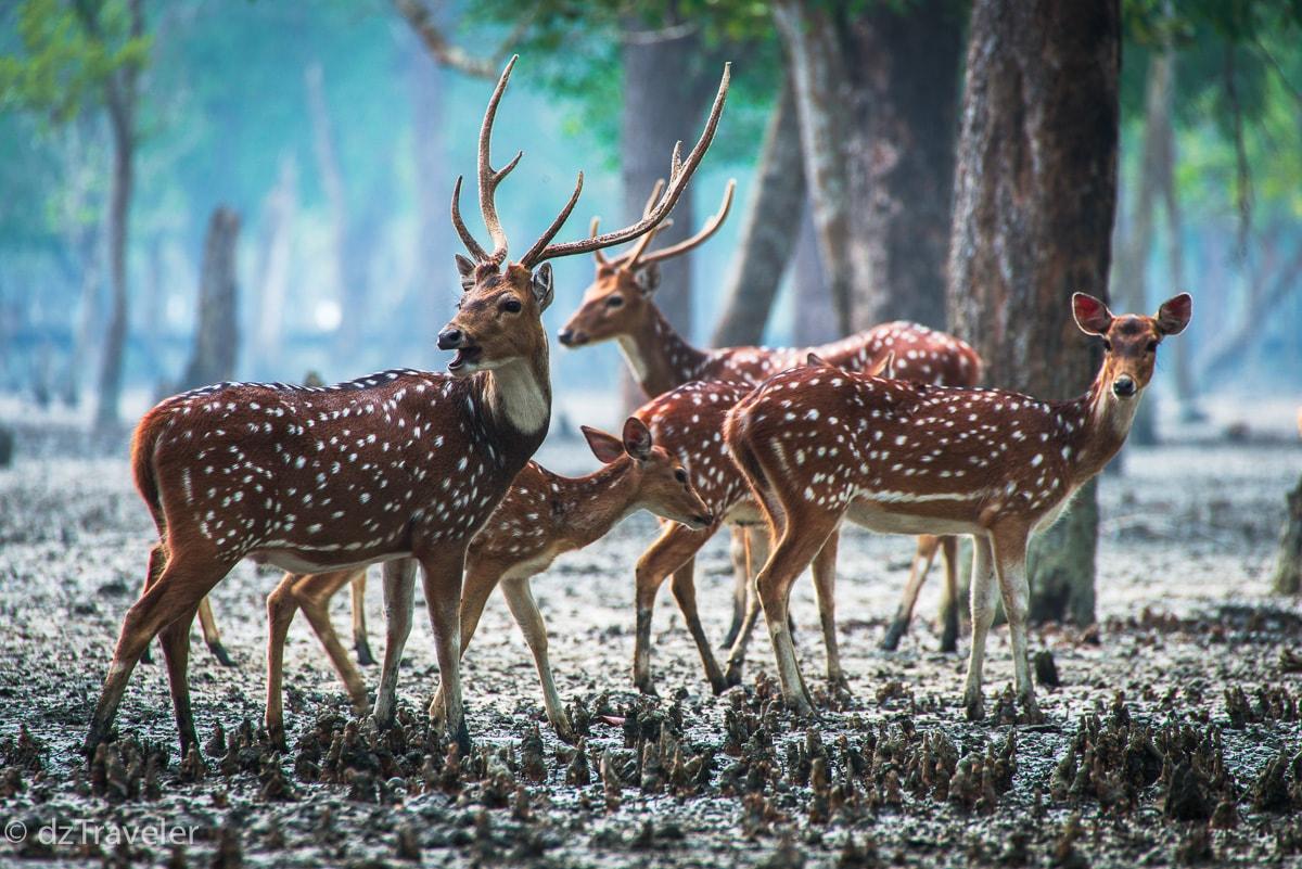 Sunderban Forest, Bangladesh