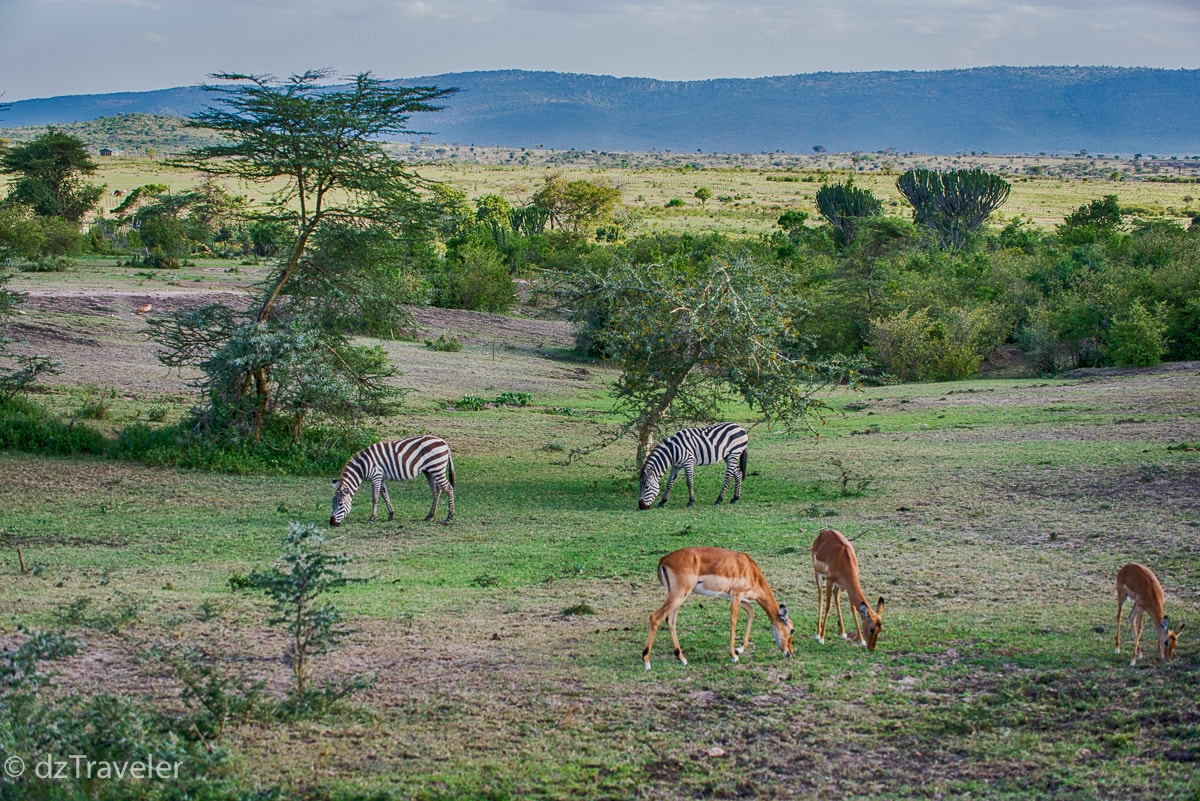 Masai Mara National Park, Kenya