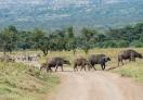 Lake Nakuru National Park, Nakurur - Kenya