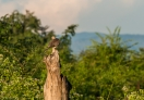 Beautiful early morning view of Udawalawe National Park