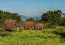 Asian wild elephants in the park!