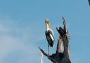 Birds on the tree top at Mau Ara Reservoir!
