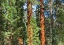 Sequoia National Park, California