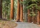 All looks so tiny next to those giant Sequoia trees.