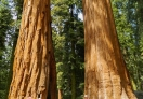 One Of The Most Photographed is The Twin Brothers in Sequoia NP