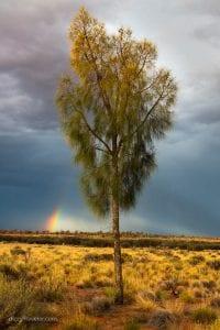 Rainbow in the desert - NT, Australia