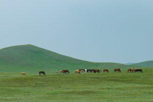 Mongolian landscape along the Trans-Mongolian Rail route